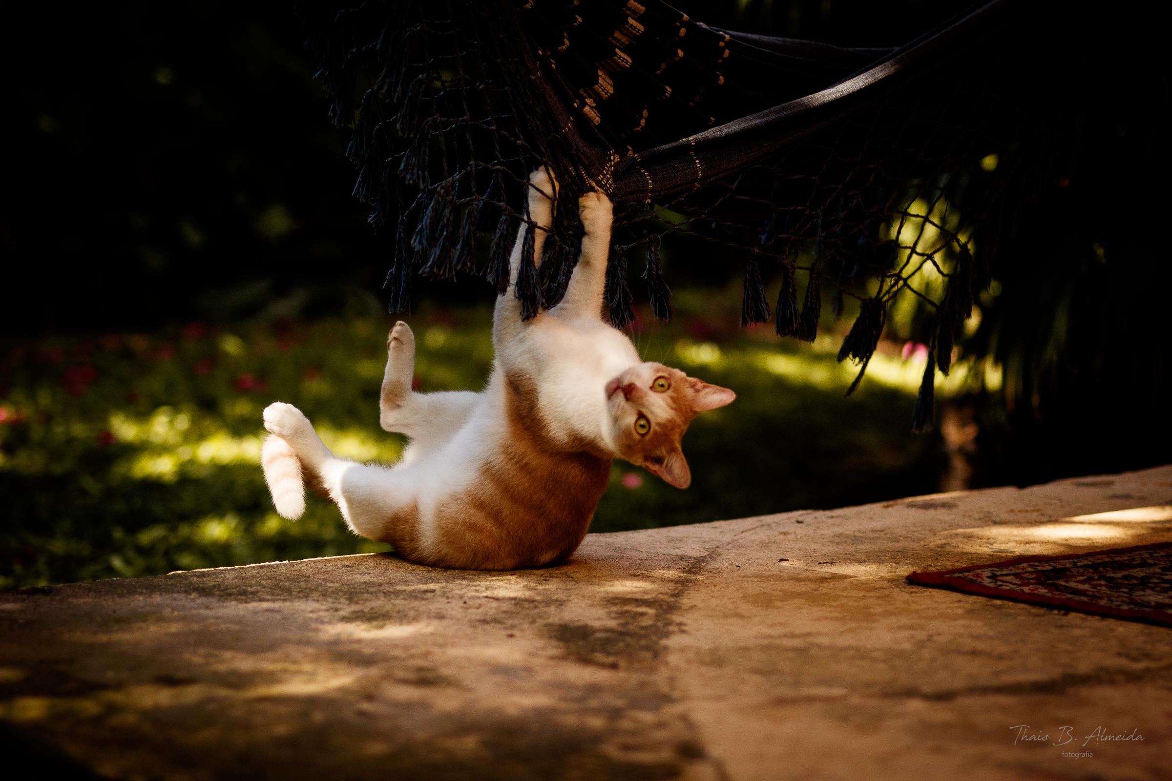 projeto gatinho zen - mexirica