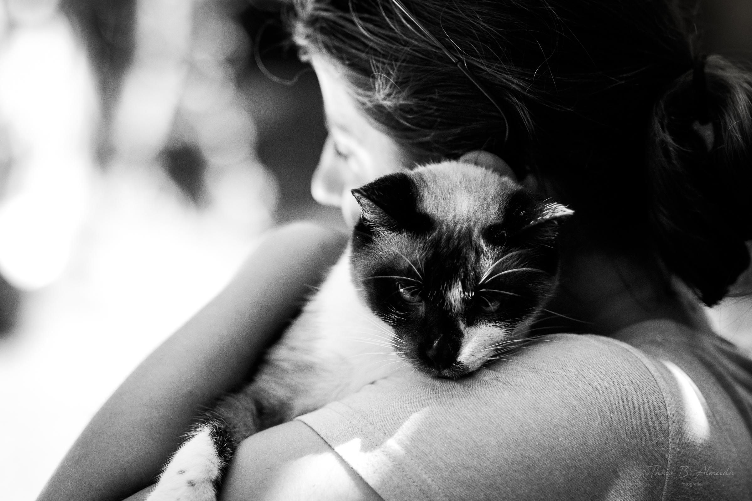 projeto gatinho zen - paçoca