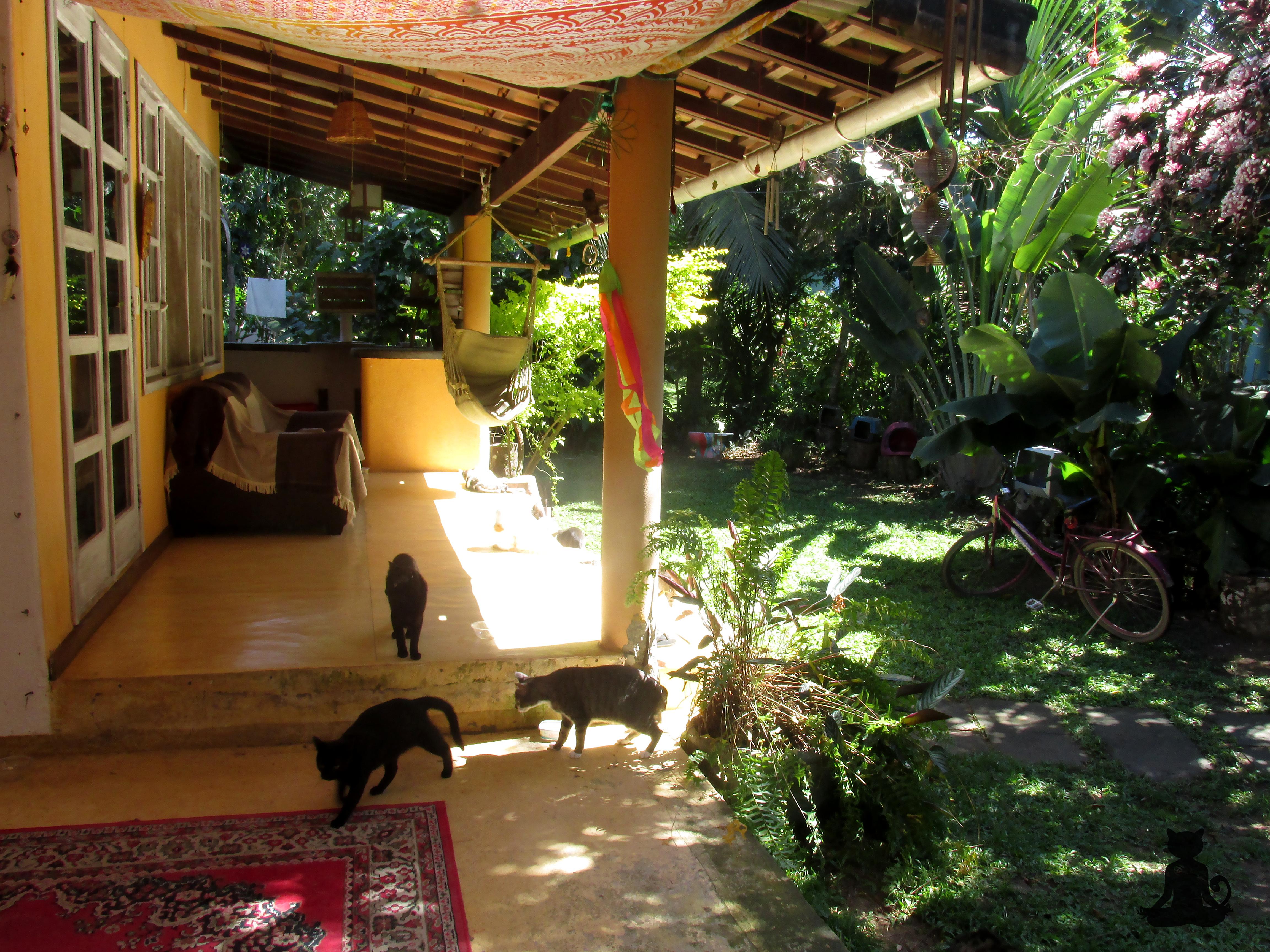 projeto gatinho zen - casa