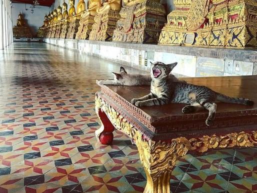 O Hitória do Gato no Extremo Oriente