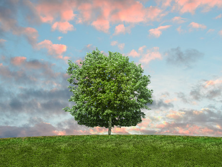 How to Develop Effective End-of-Life Plans