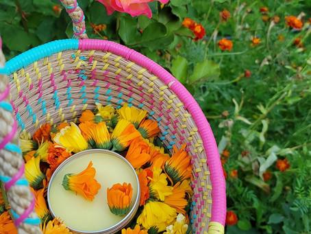 Calendula-a pot of gold