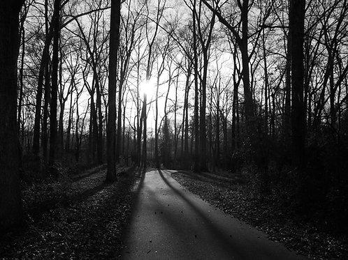 Black & white trail