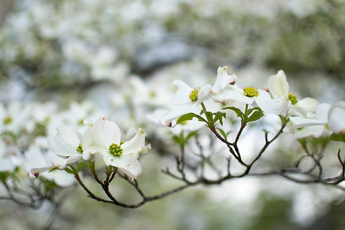 Flower blossom branch
