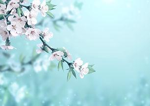 Conseil en élixir floral Nantes