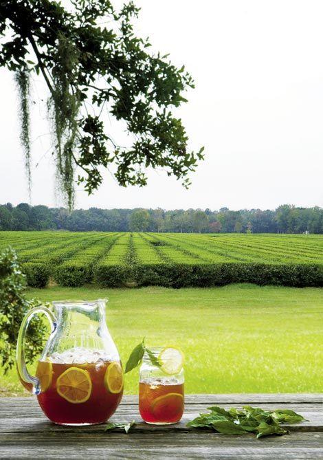 charleston tea plantation.jpg