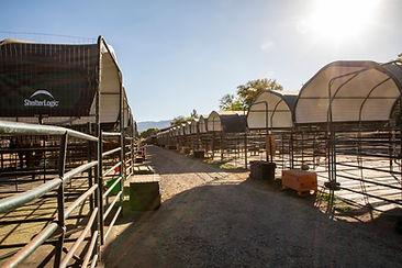 Horse Bording stalls at Future Hope Equestrian
