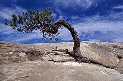 resilient-tree.jpg