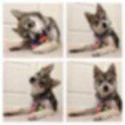 cute-puppy-1024x1024.jpg