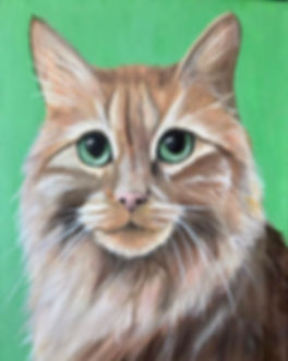 Cat Portrait Commission