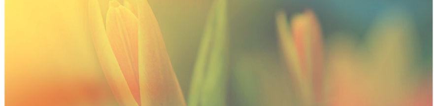 Flor en la luz del sol 2015-8-19-14:19:6