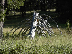 SL-Aug 2007 026