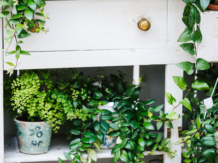 why you should surround yourself with plants.