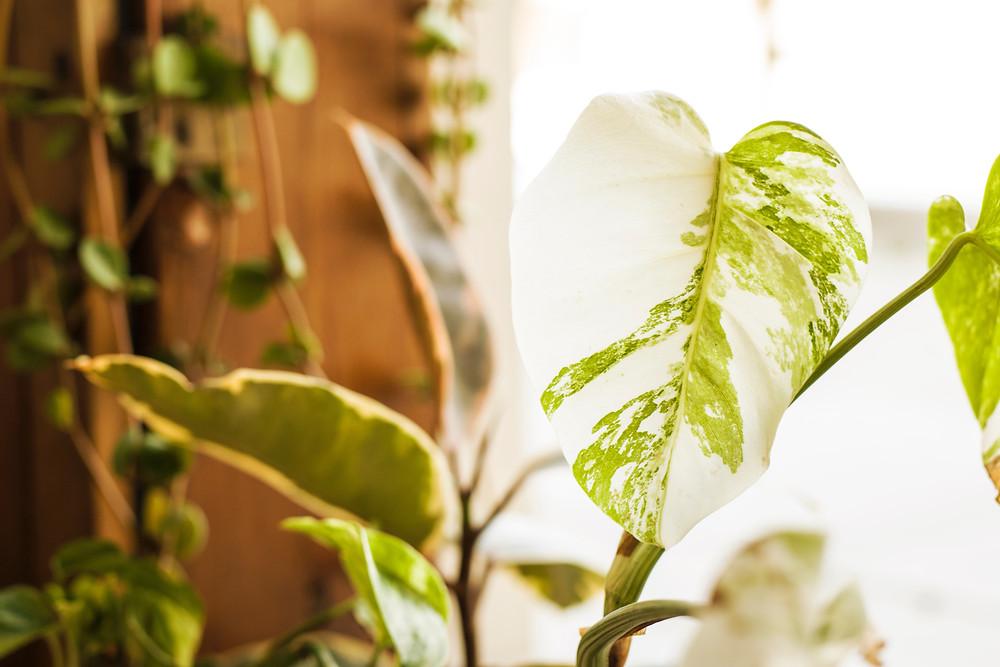 leafy plant \ fully grown