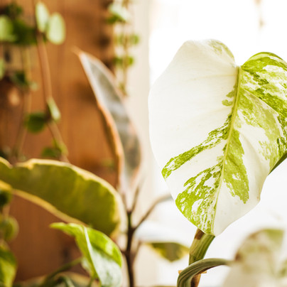 how to achieve self-empowerment through sustainable living.