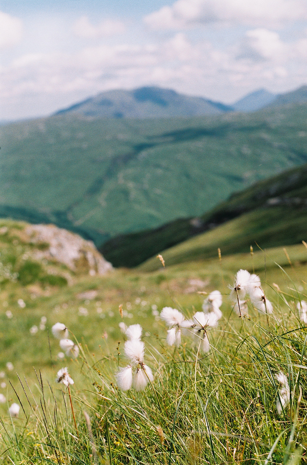 close up of some grass amongst hilly countryside / fully grown
