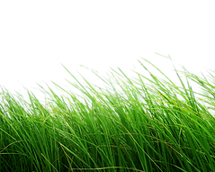 11-grass-png-image-green-grass-png-pictu