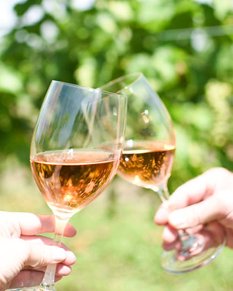 Two glasses of wine cheersing on the vineyard in Amherstburg, Ontario