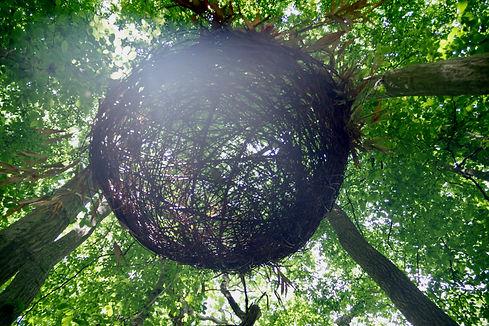 dazzle nest MFrench.jpeg