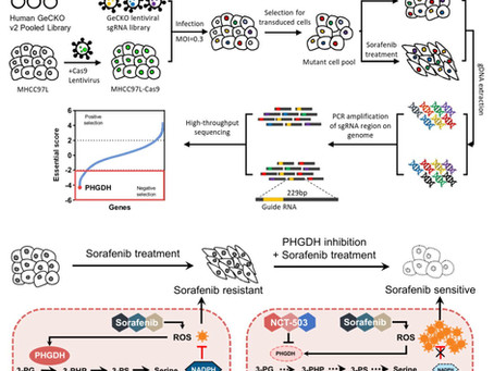 CRISPR library screening identified PHGDH as a critical driver for Sorafenib resistance in HCC