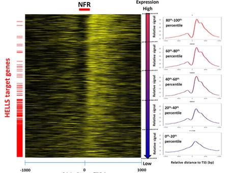 HELLS regulates chromatin remodeling in liver cancer