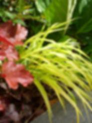 association de plantes vivaces sol frais mi-ombre bergenia heuchere et hakonechloa