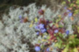 plantes pour jardins médterranéens