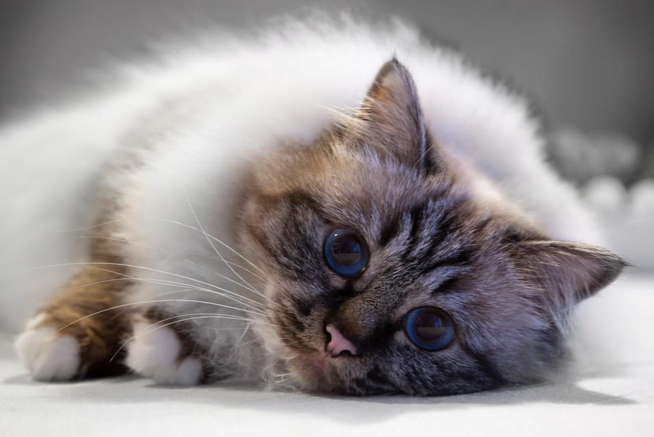 katt_1_.jpg