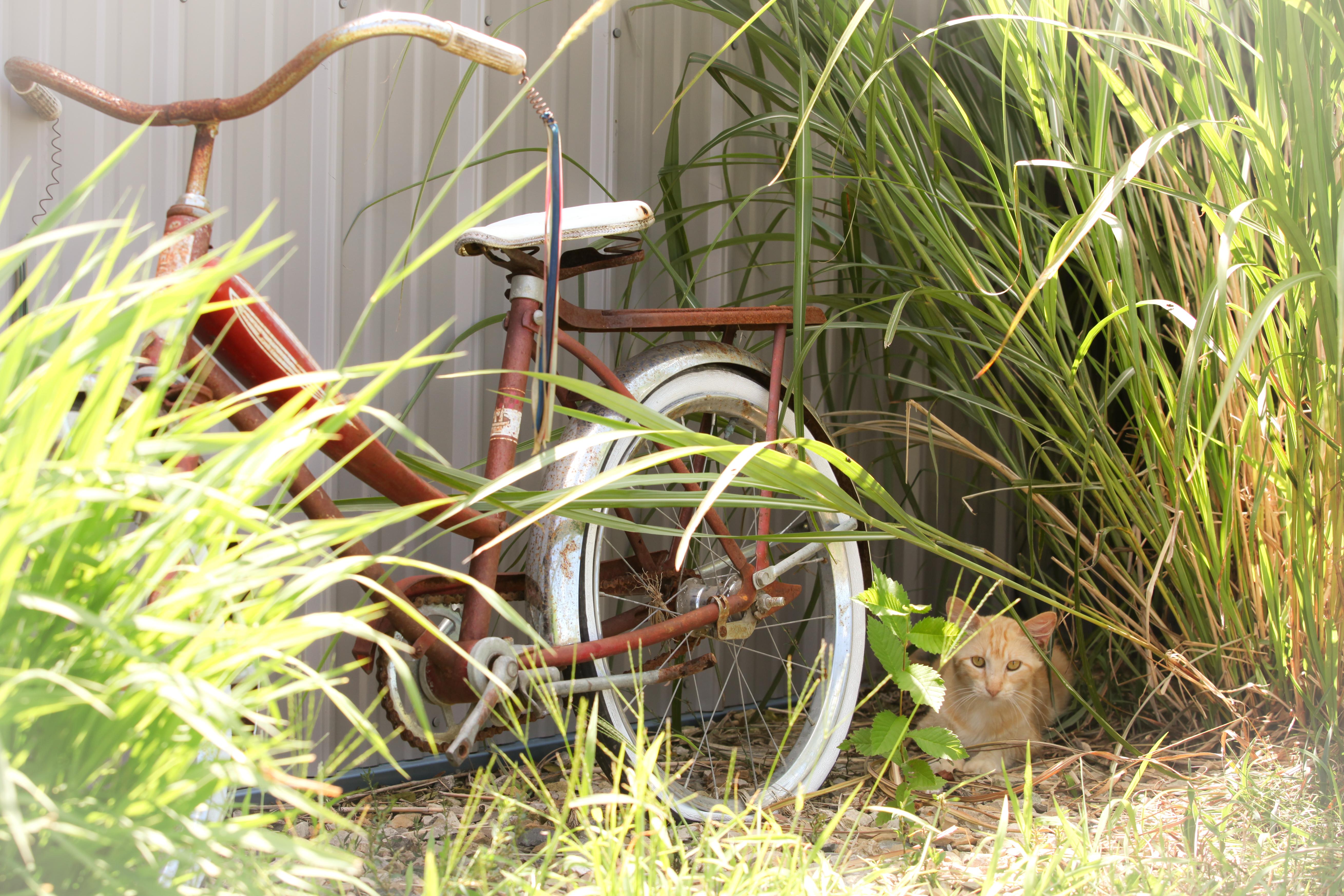 Cats-5139