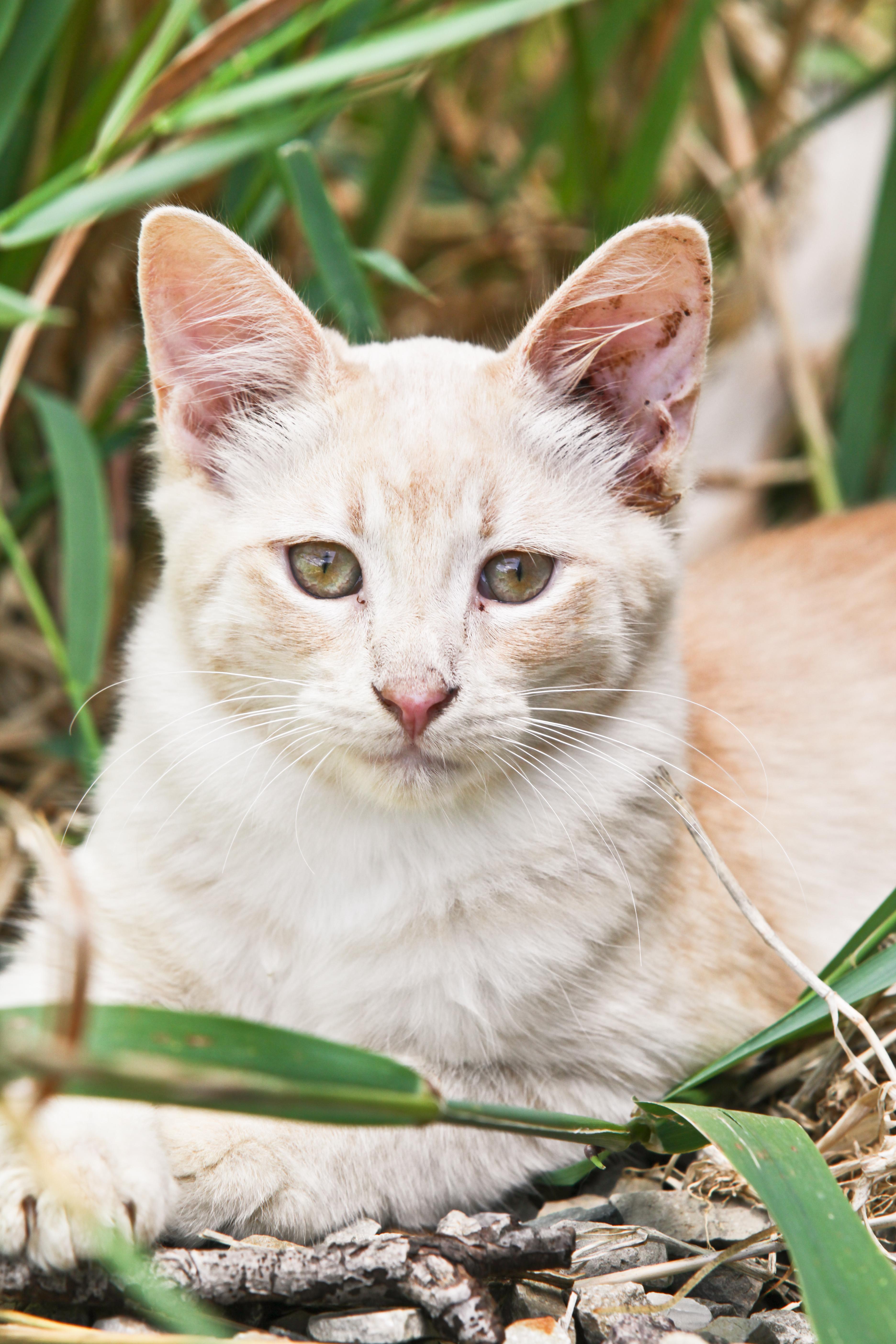 Cats-5098-2