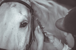 Horse_2016-3289