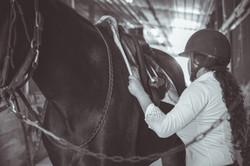 Horse_2016-3186