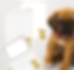DOG THEME PAGE BORDERS_edited.png