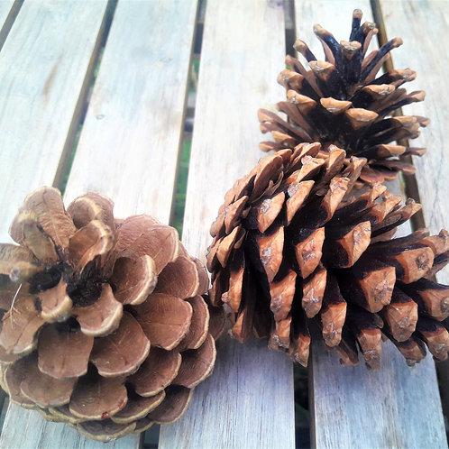 Natural fir cones