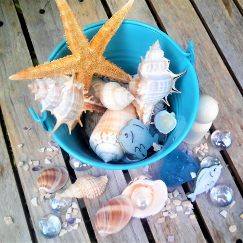 Natural loose parts shells. Montessori sensory and practical life materials.