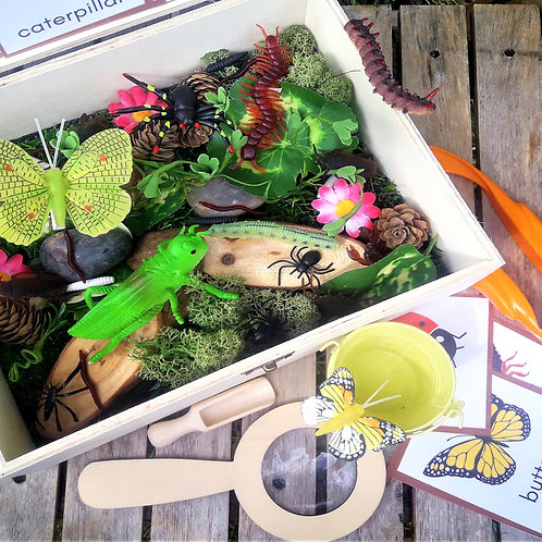 Bug hunter sensory treasure box, natural loose parts