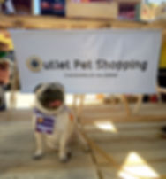 Outlet Pet Shopping