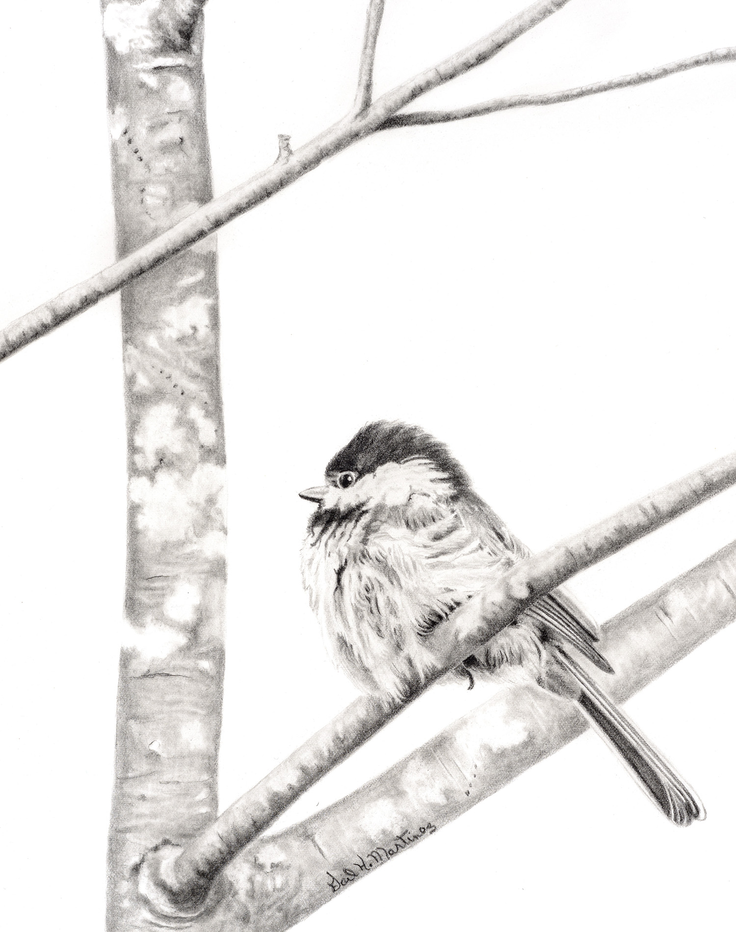 Mr. Chickadee - Graphite