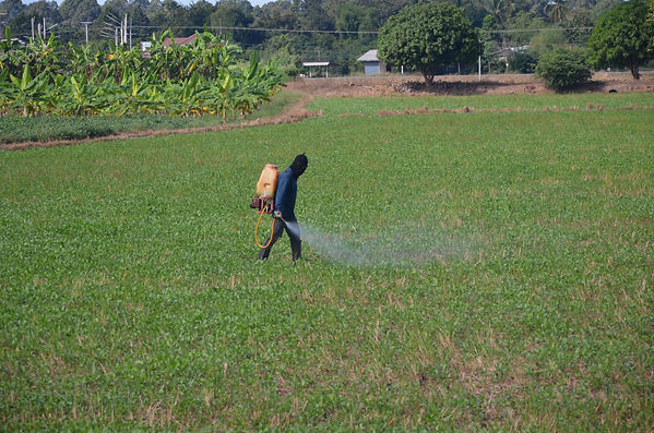 A Thai farmer is spraying pesticides on his rice field in Thailand.