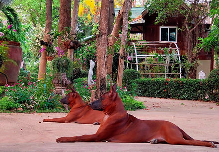 dogs yoga.jpg