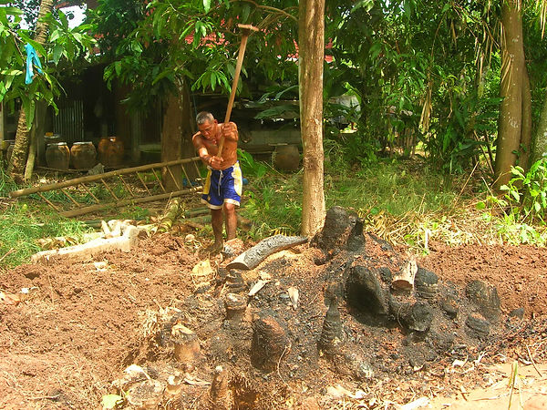 Digging out a bamboo root in Thailand.