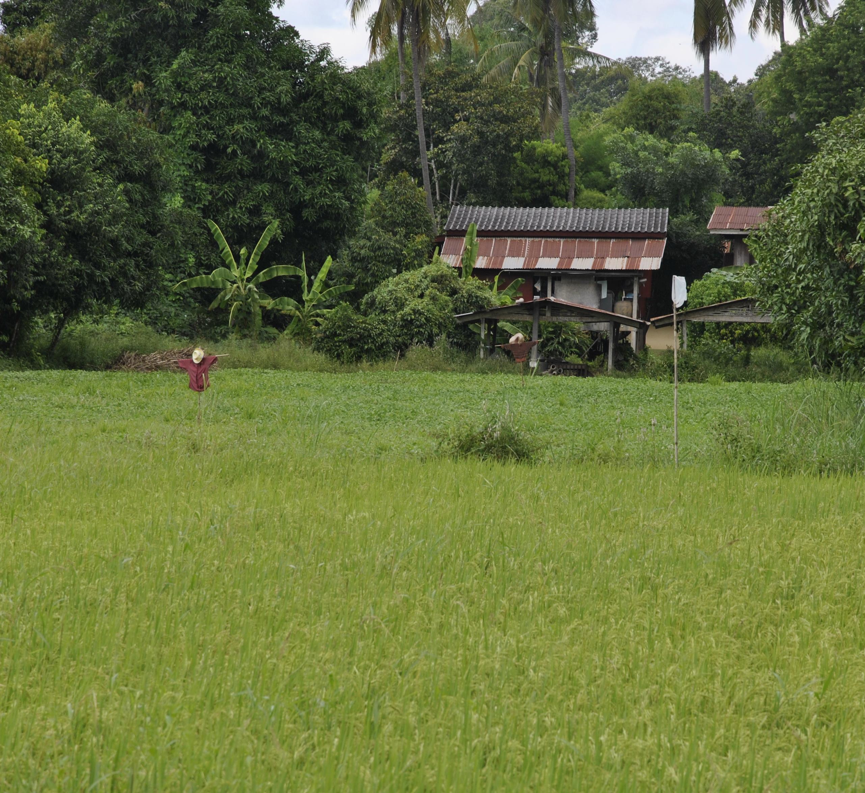An ABC Guide to Rural Thailand