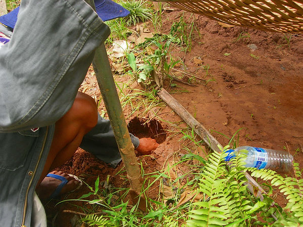 Digging for insects in Thailand to eat.