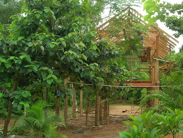 A Teak house in Thailand begins to become a home.