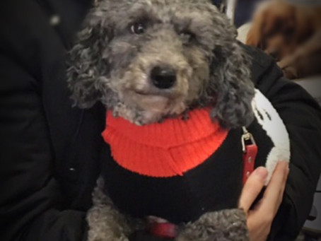 NEW* Therapy Dog to Comfort Grieving