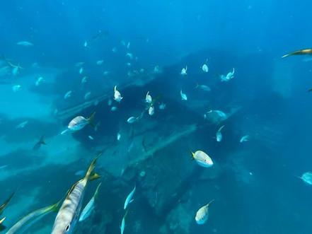 Boat Charters St Thomas _ Phoenix Island Charters _ snorkeling wreck tile 3.jpg
