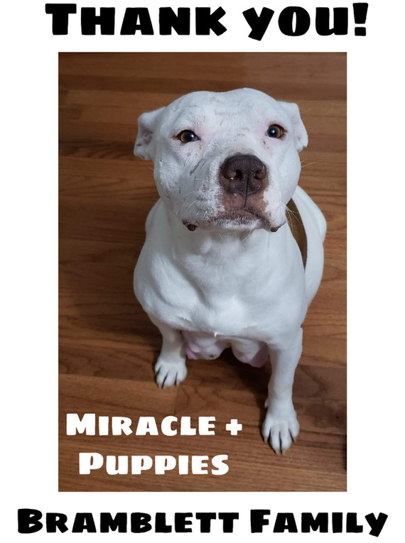Miracle puppies