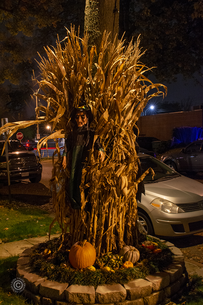 Witches hiding in the corn for Halloween.