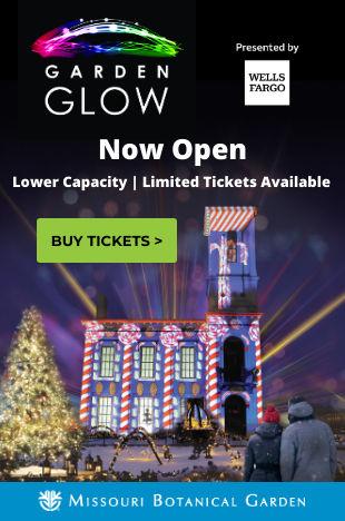 Glow Holiday Light Site-310x468 px-Custo