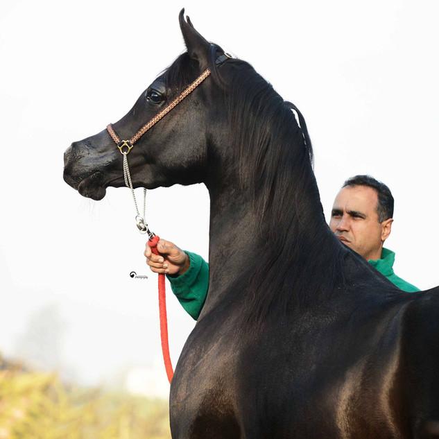 Amjad Kilany